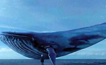 blue-whale-dangerous-game