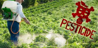sc-issues-notice-centre-blatant-use-pesticides-india